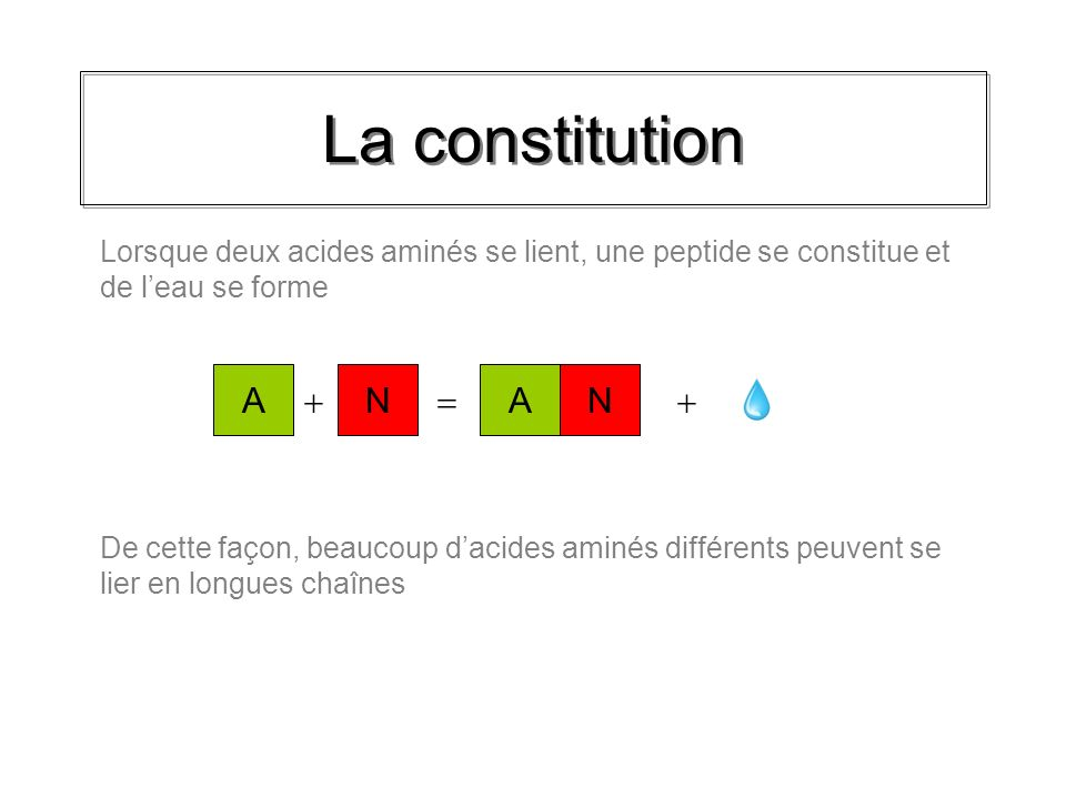 La constitution A N A N   
