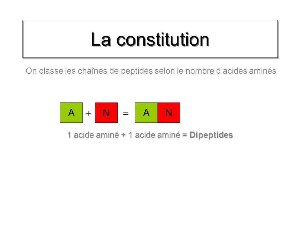 1 acide aminé + 1 acide aminé = Dipeptides