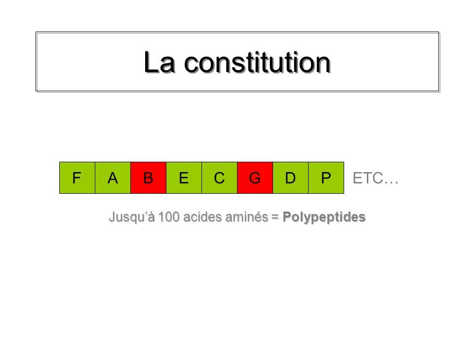Jusqu'à 100 acides aminés = Polypeptides