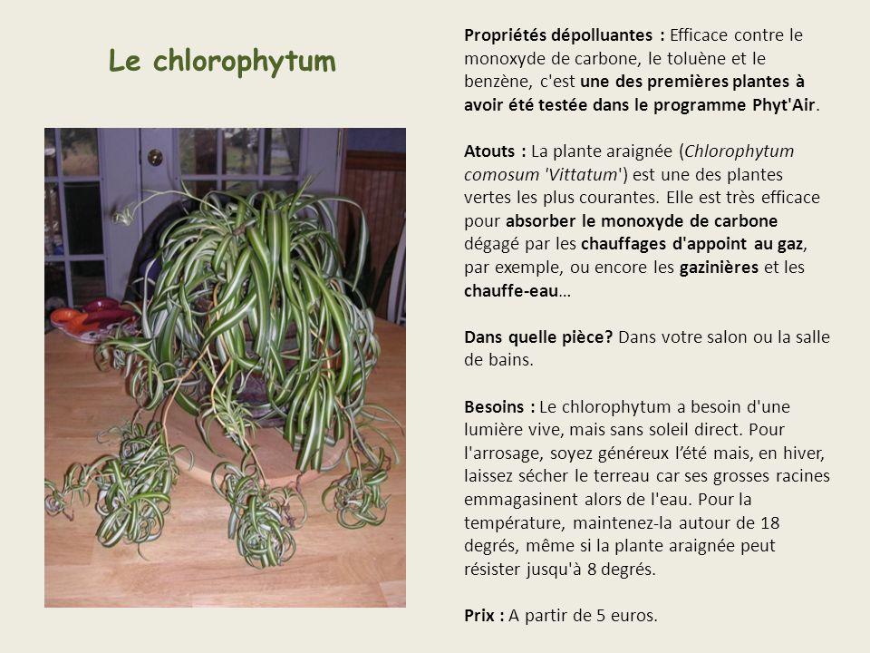 Propriétés dépolluantes : Efficace contre le monoxyde de carbone, le toluène et le benzène, c est une des premières plantes à avoir été testée dans le programme Phyt Air. Atouts : La plante araignée (Chlorophytum comosum Vittatum ) est une des plantes vertes les plus courantes. Elle est très efficace pour absorber le monoxyde de carbone dégagé par les chauffages d appoint au gaz, par exemple, ou encore les gazinières et les chauffe-eau… Dans quelle pièce Dans votre salon ou la salle de bains. Besoins : Le chlorophytum a besoin d une lumière vive, mais sans soleil direct. Pour l arrosage, soyez généreux l'été mais, en hiver, laissez sécher le terreau car ses grosses racines emmagasinent alors de l eau. Pour la température, maintenez-la autour de 18 degrés, même si la plante araignée peut résister jusqu à 8 degrés. Prix : A partir de 5 euros.