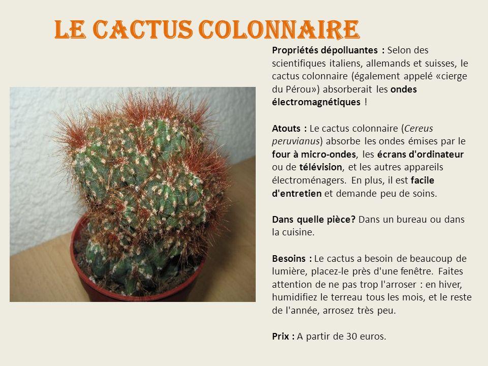 Le cactus colonnaire