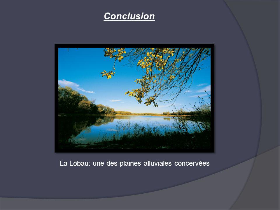 Conclusion La Lobau: une des plaines alluviales concervées
