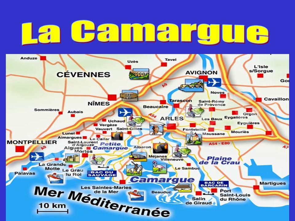 La Camargue