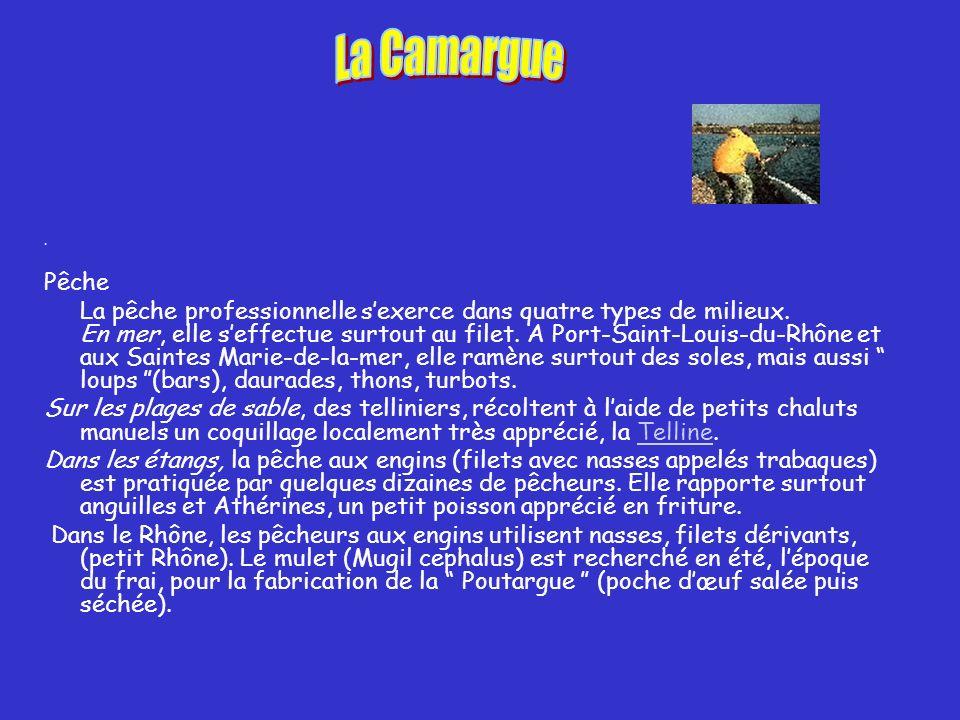 La Camargue . Pêche.