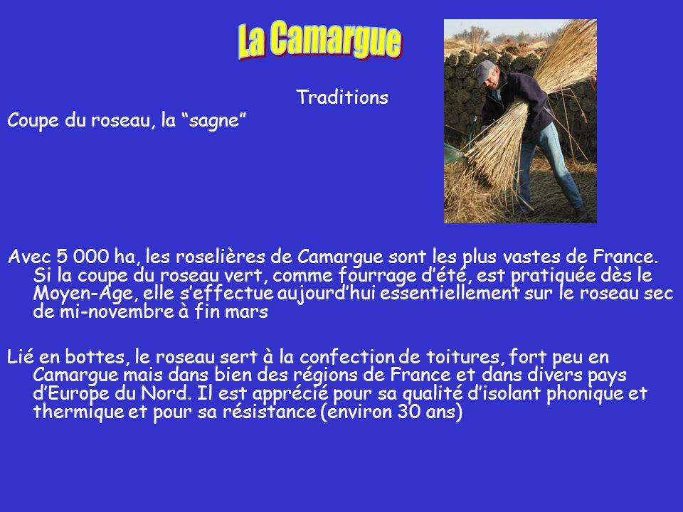 La Camargue Traditions Coupe du roseau, la sagne