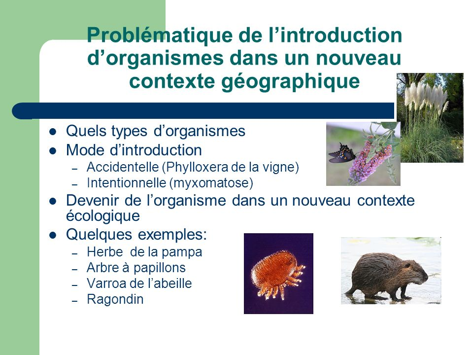 Problématique de l'introduction d'organismes dans un nouveau contexte géographique