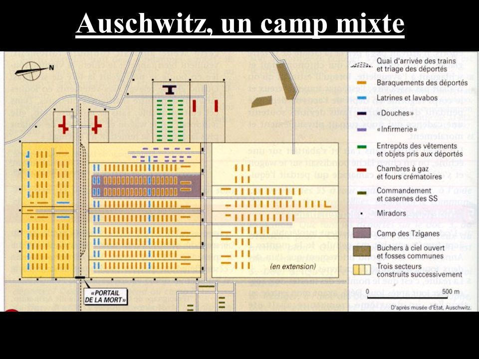 Auschwitz, un camp mixte