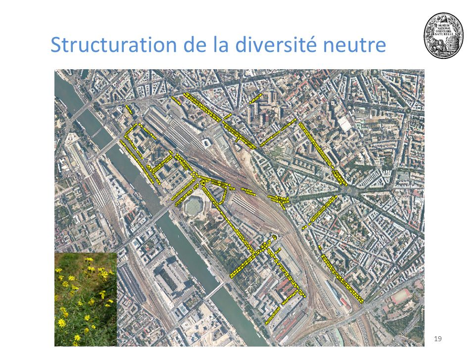 Structuration de la diversité neutre