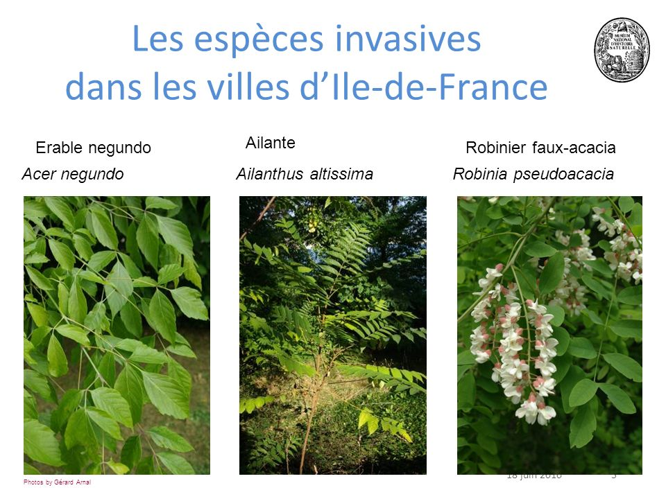 Les espèces invasives dans les villes d'Ile-de-France