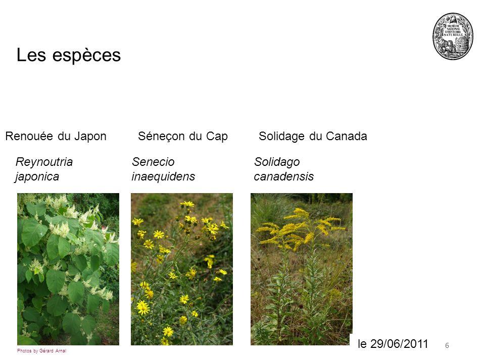 Les espèces Renouée du Japon Séneçon du Cap Solidage du Canada