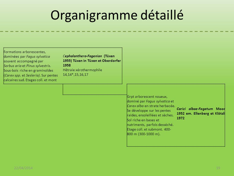 Organigramme détaillé