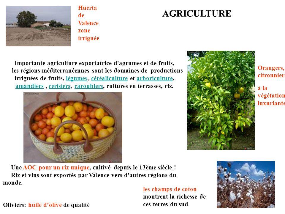Importante agriculture exportatrice d agrumes et de fruits,