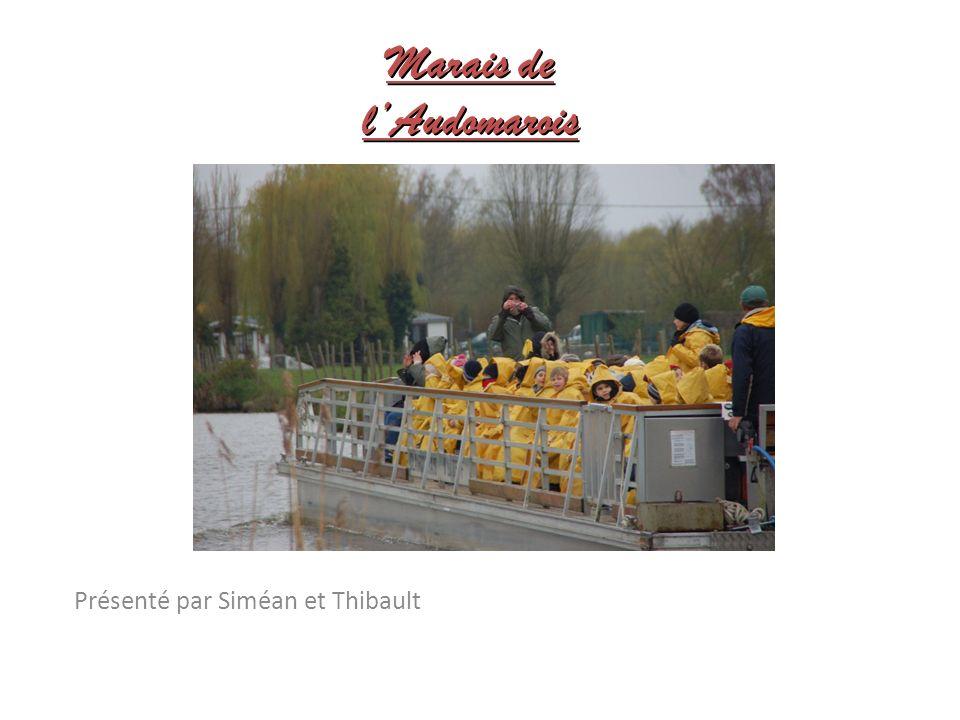Marais de l'Audomarois