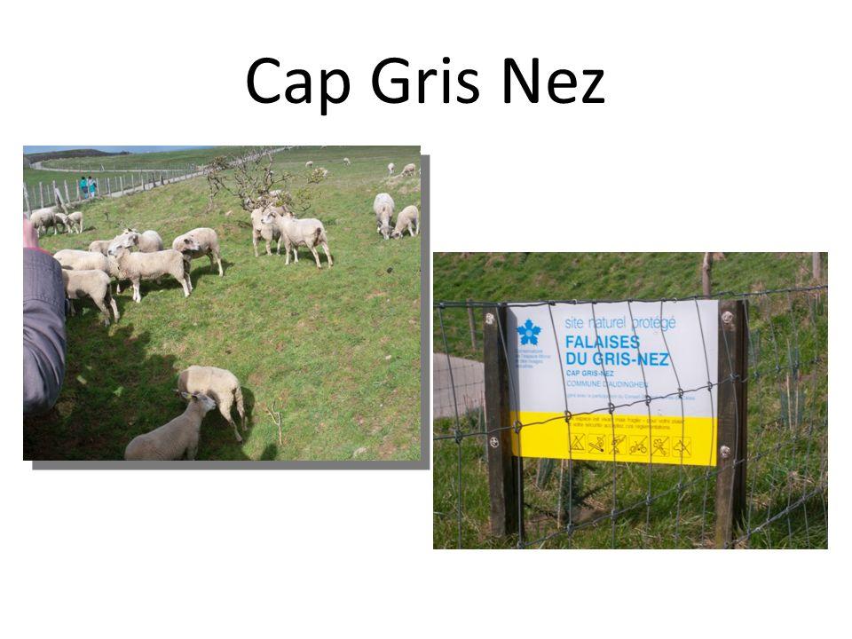 Cap Gris Nez