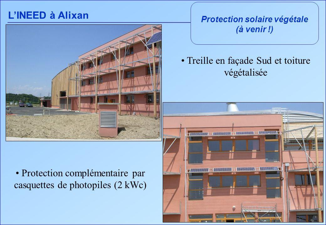 Protection solaire végétale
