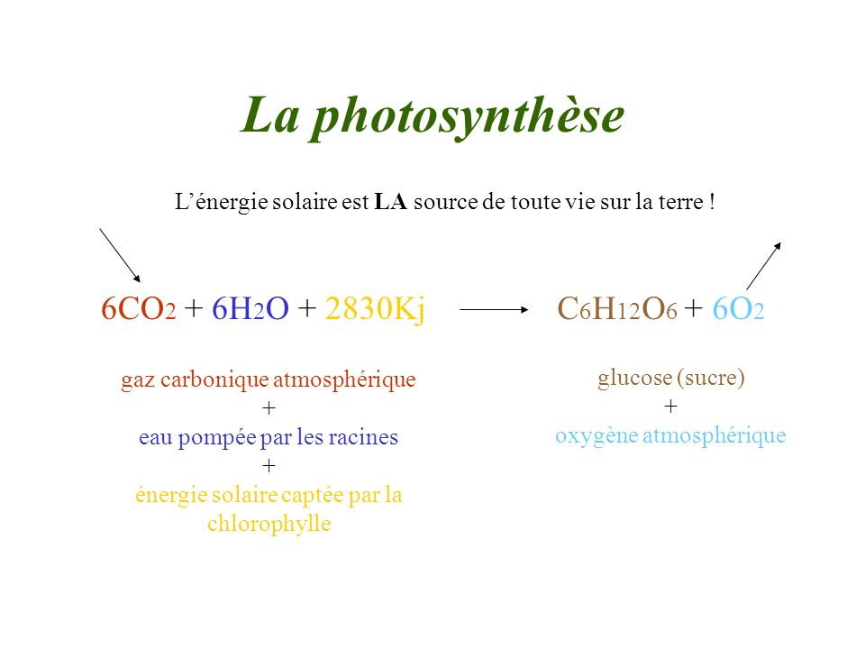 La photosynthèse 6CO2 + 6H2O + 2830Kj C6H12O6 + 6O2