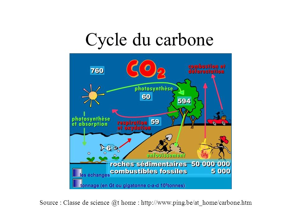 Cycle du carbone Source : Classe de science @t home : http://www.ping.be/at_home/carbone.htm