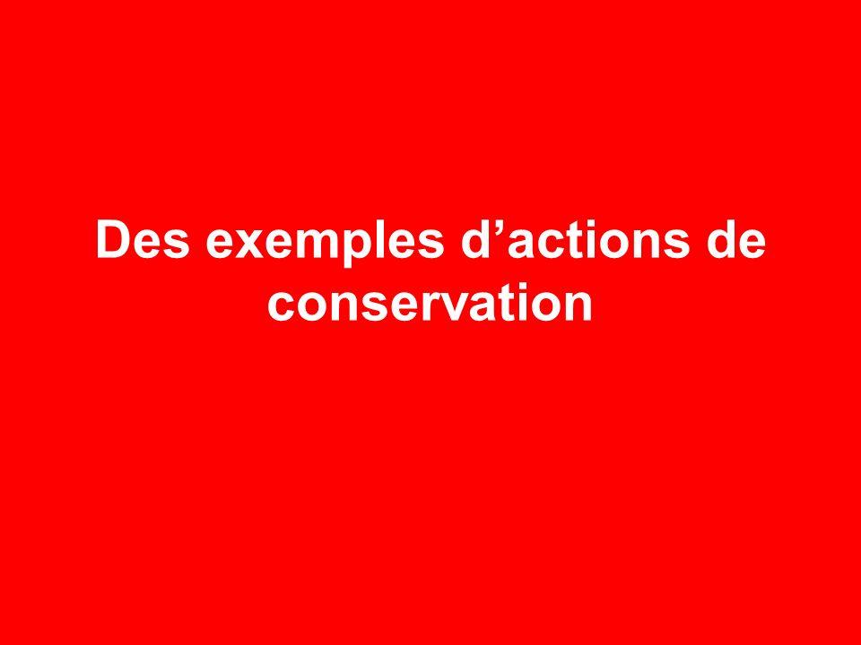 Des exemples d'actions de conservation