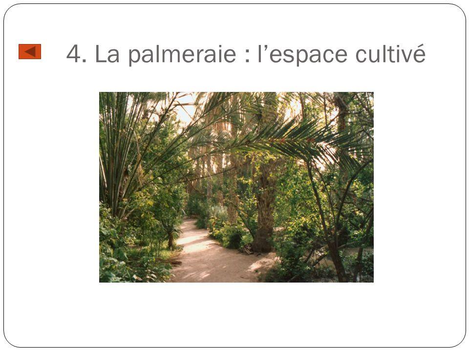 4. La palmeraie : l'espace cultivé