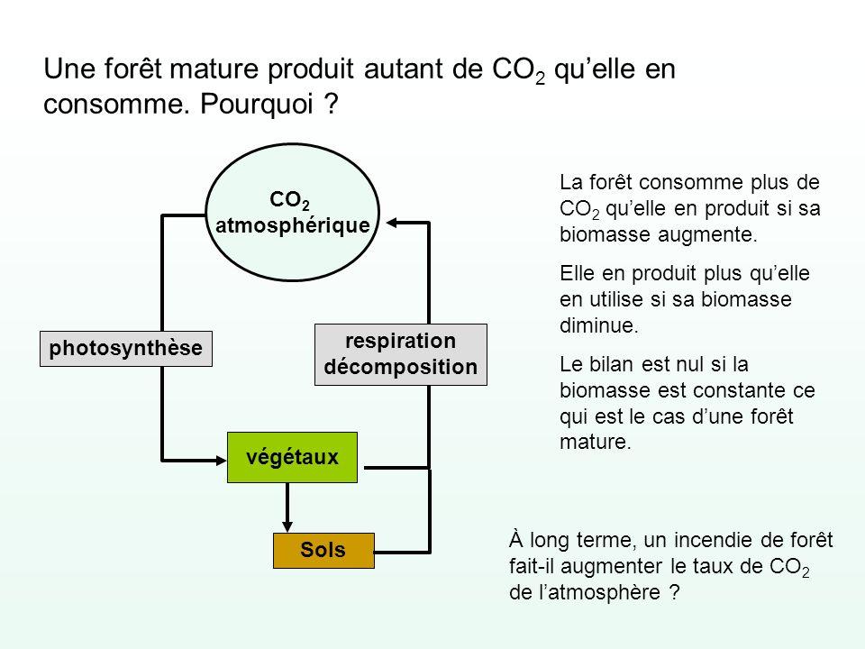 Une forêt mature produit autant de CO2 qu'elle en consomme. Pourquoi