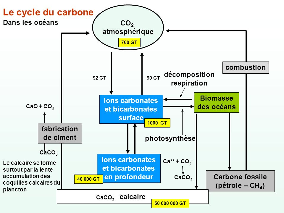 Le cycle du carbone CO2 atmosphérique Dans les océans combustion