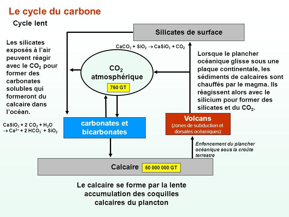 carbonates et bicarbonates