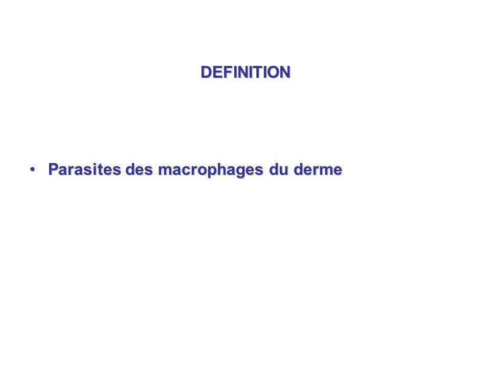 DEFINITION Parasites des macrophages du derme