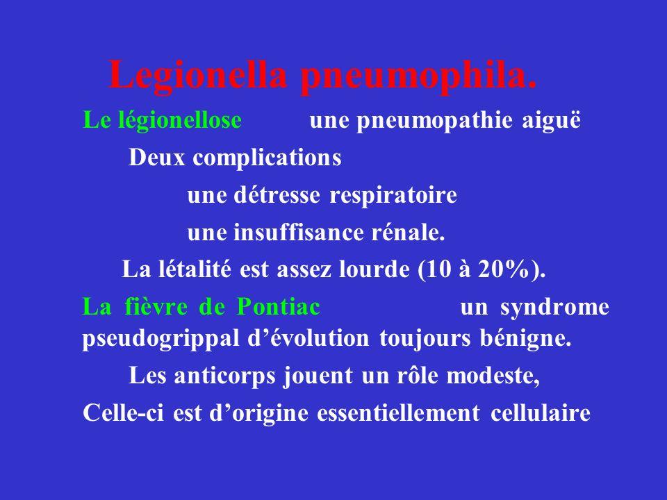 Legionella pneumophila.