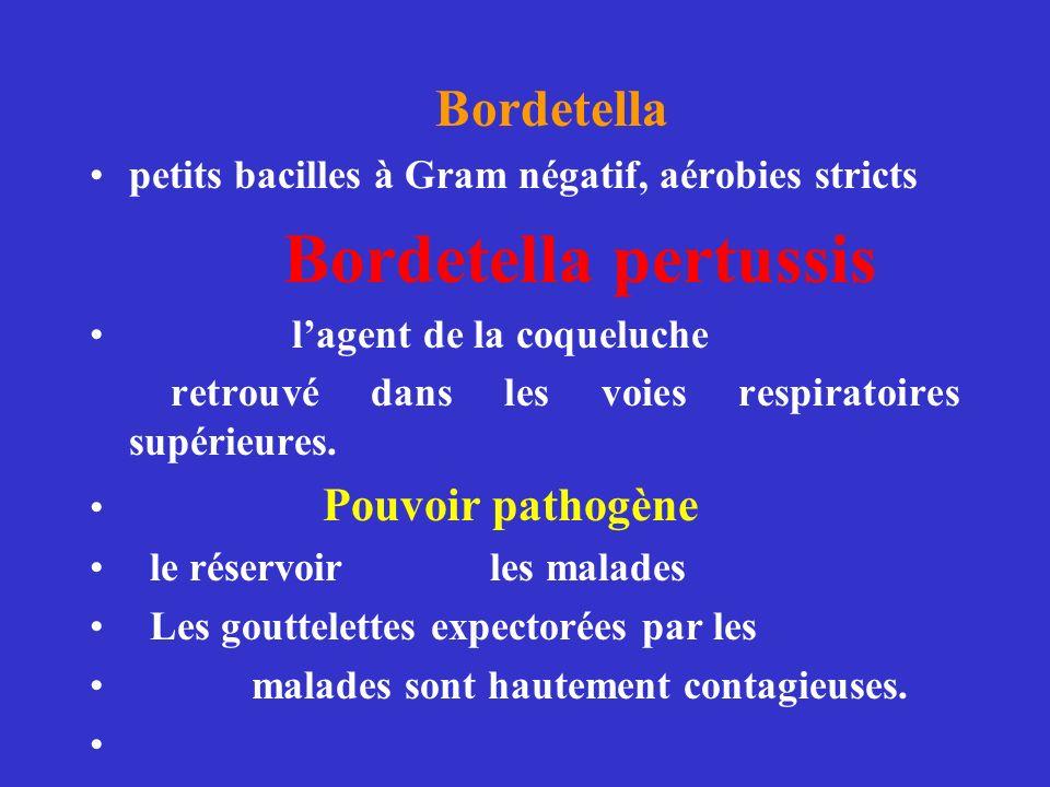 Bordetella petits bacilles à Gram négatif, aérobies stricts