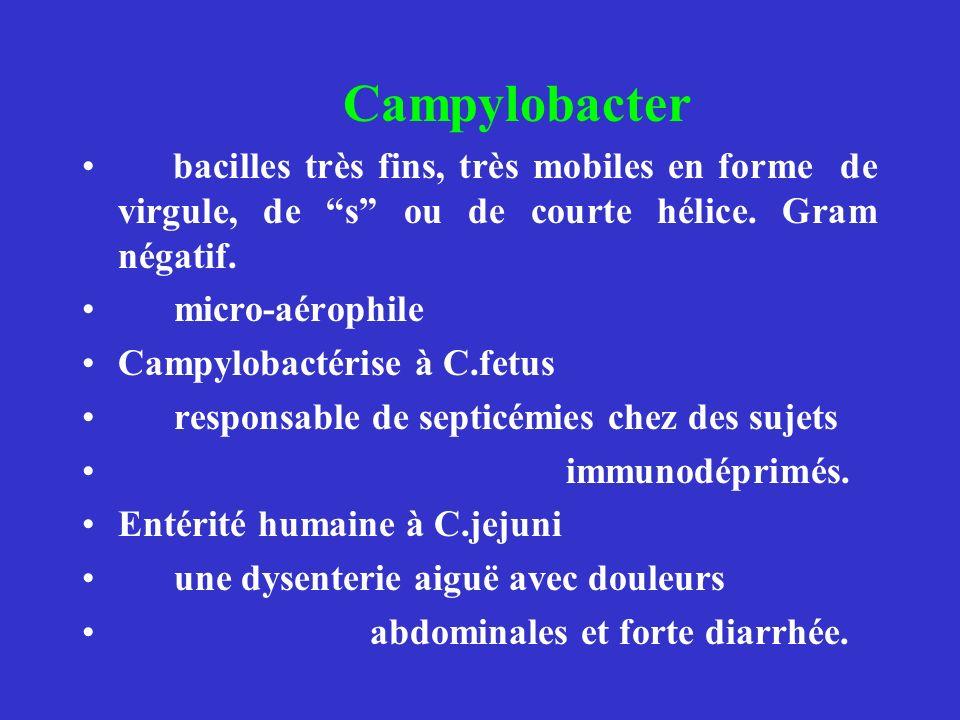 Campylobacter bacilles très fins, très mobiles en forme de virgule, de s ou de courte hélice. Gram négatif.