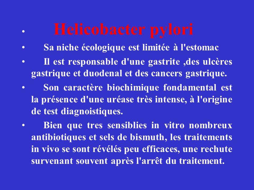 Helicobacter pylori Sa niche écologique est limitée à l estomac.
