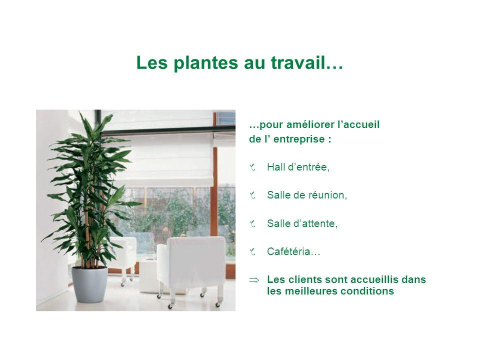 Les plantes au travail…
