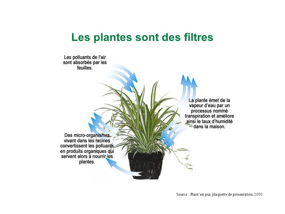 Les plantes sont des filtres