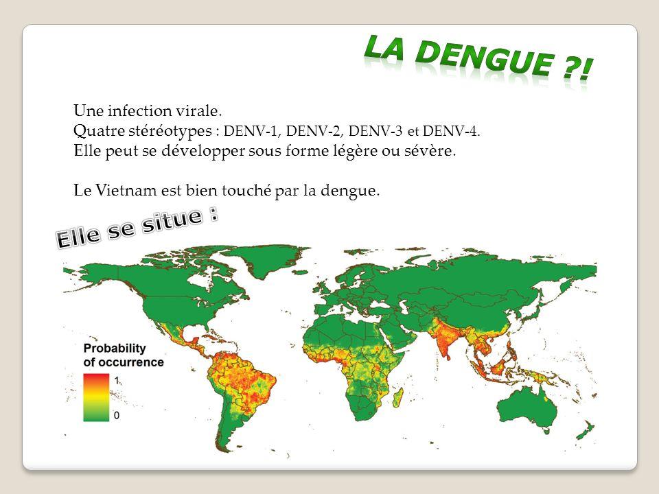 La dengue ! Elle se situe : Une infection virale.