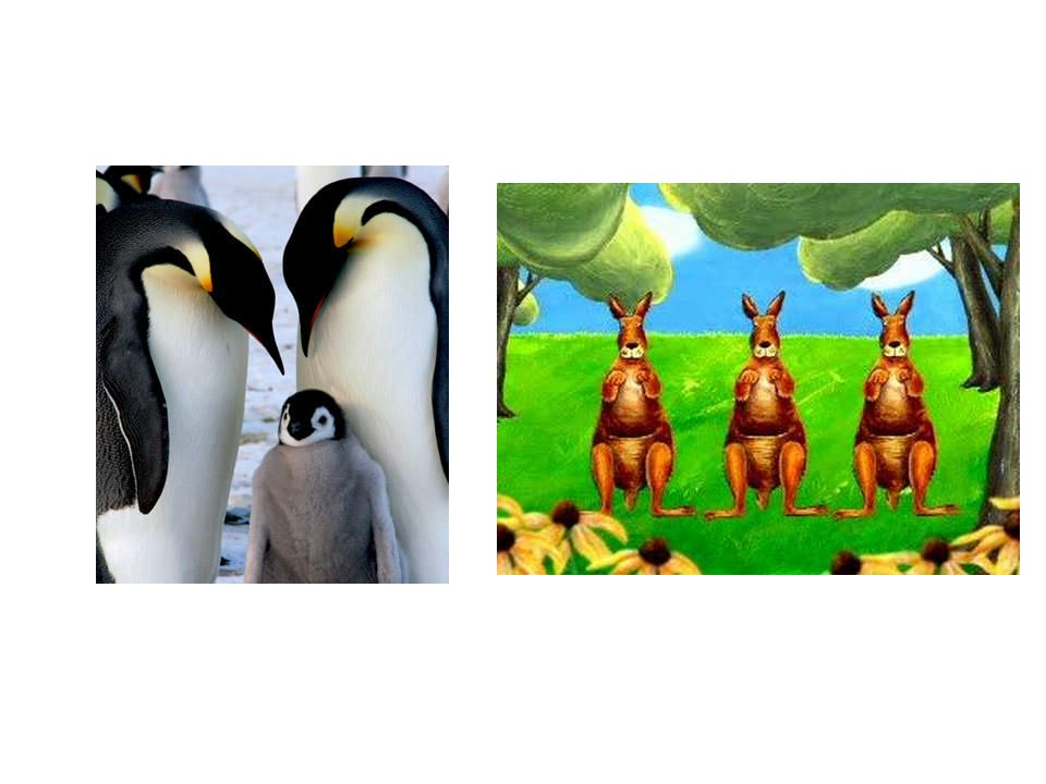 Il y a autant de pingouin que kangourous.