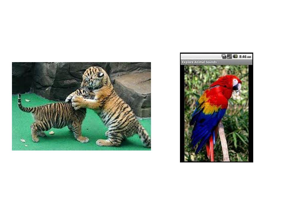Il y a plus de tigres que perroquet