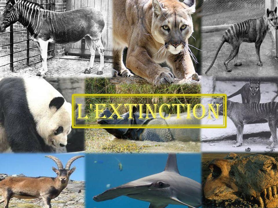 L extinction