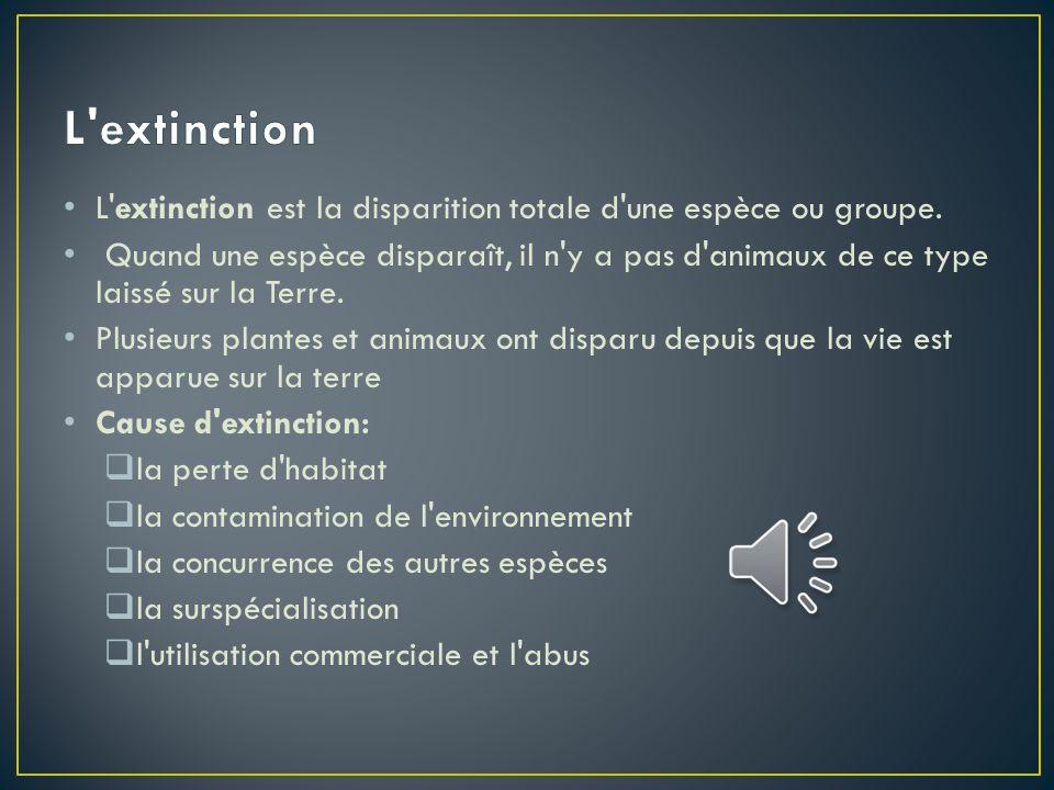L extinction L extinction est la disparition totale d une espèce ou groupe.