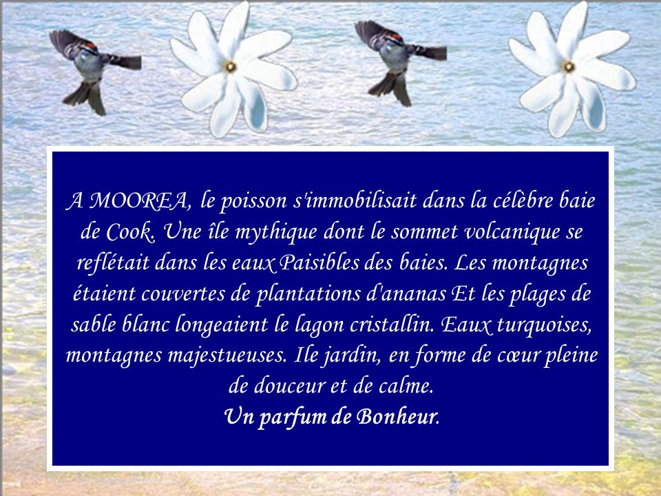 A MOOREA, le poisson s immobilisait dans la célèbre baie de Cook