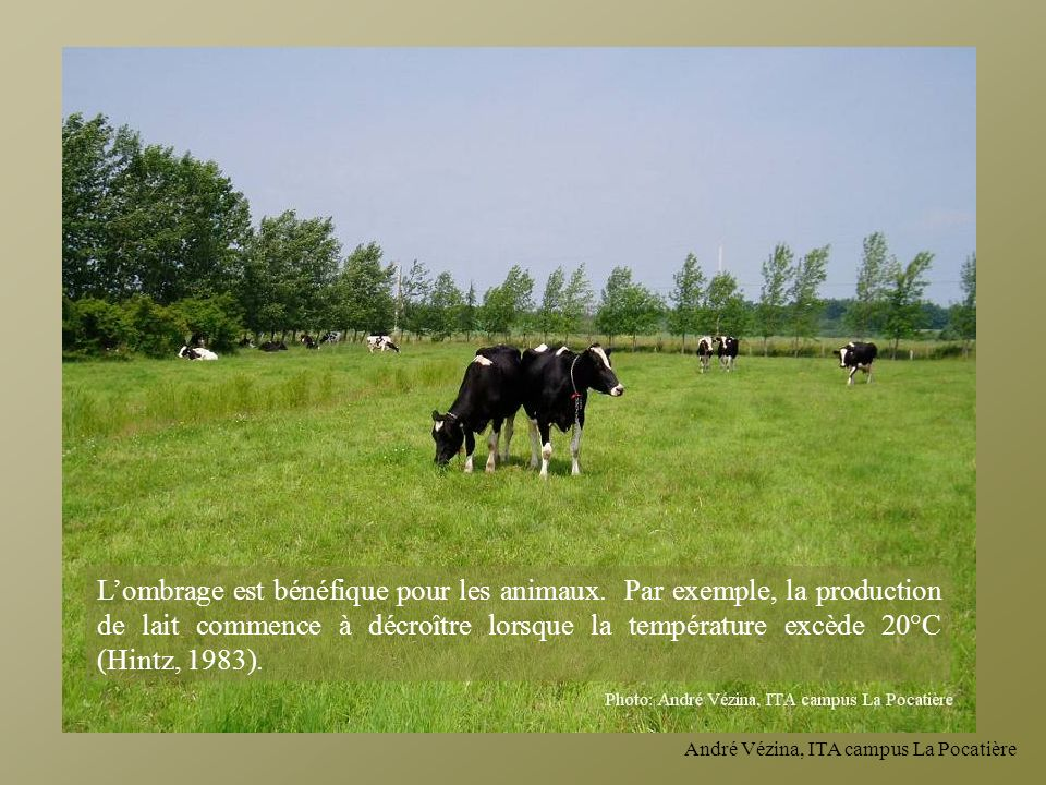 L'ombrage est bénéfique pour les animaux