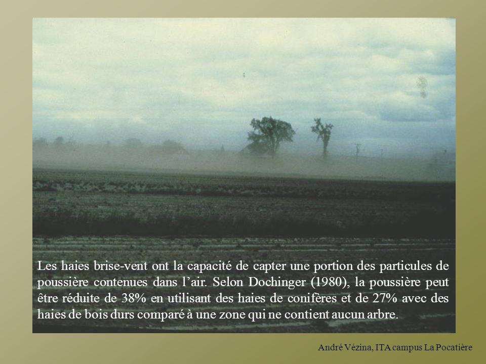 Les haies brise-vent ont la capacité de capter une portion des particules de poussière contenues dans l'air. Selon Dochinger (1980), la poussière peut être réduite de 38% en utilisant des haies de conifères et de 27% avec des haies de bois durs comparé à une zone qui ne contient aucun arbre.