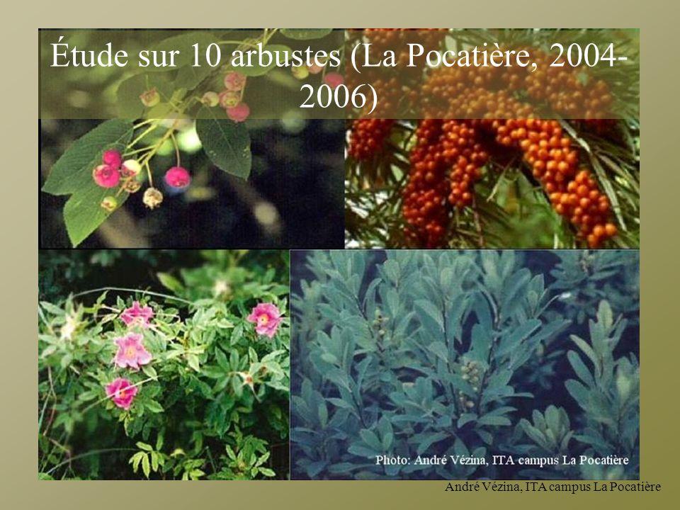 Étude sur 10 arbustes (La Pocatière, 2004-2006)