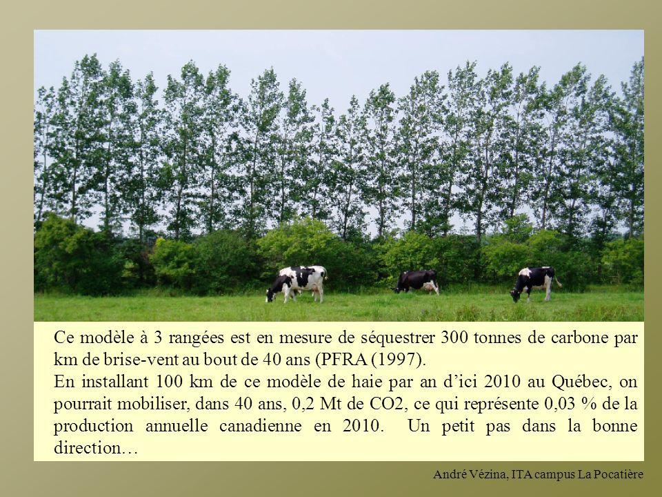 Ce modèle à 3 rangées est en mesure de séquestrer 300 tonnes de carbone par km de brise-vent au bout de 40 ans (PFRA (1997).