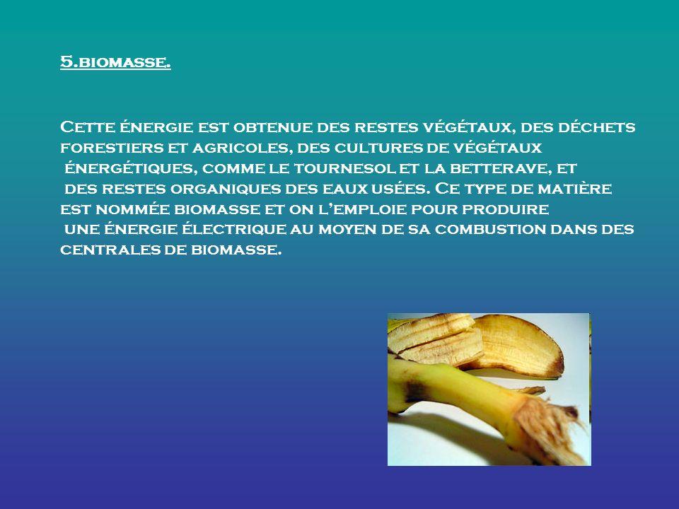 5.biomasse.
