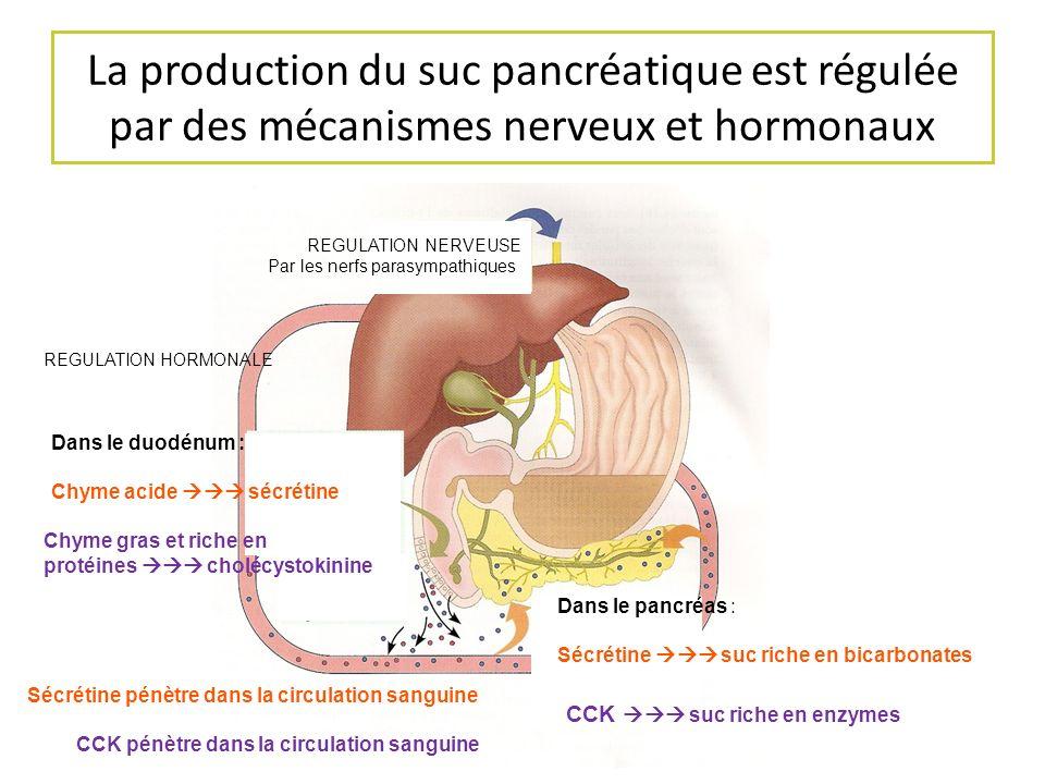 La production du suc pancréatique est régulée par des mécanismes nerveux et hormonaux