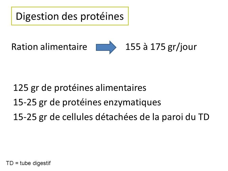 Digestion des protéines