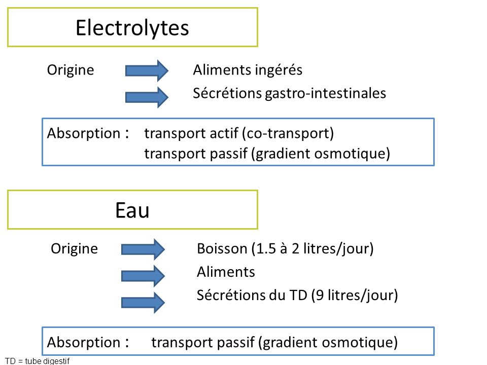 Electrolytes Origine Aliments ingérés Sécrétions gastro-intestinales Absorption : transport actif (co-transport)