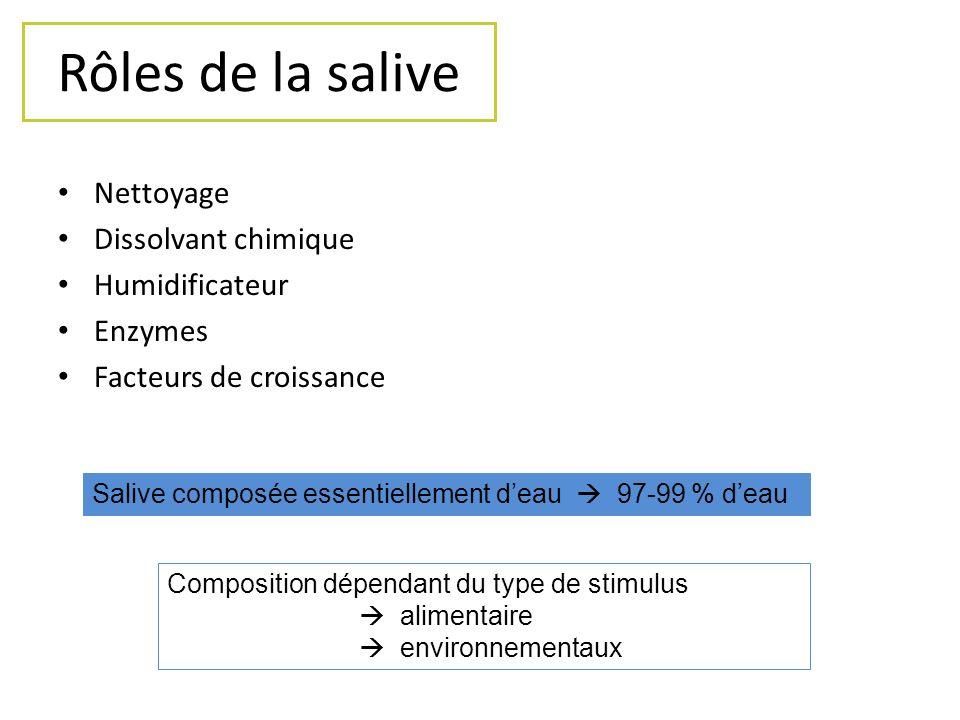 Rôles de la salive Nettoyage Dissolvant chimique Humidificateur