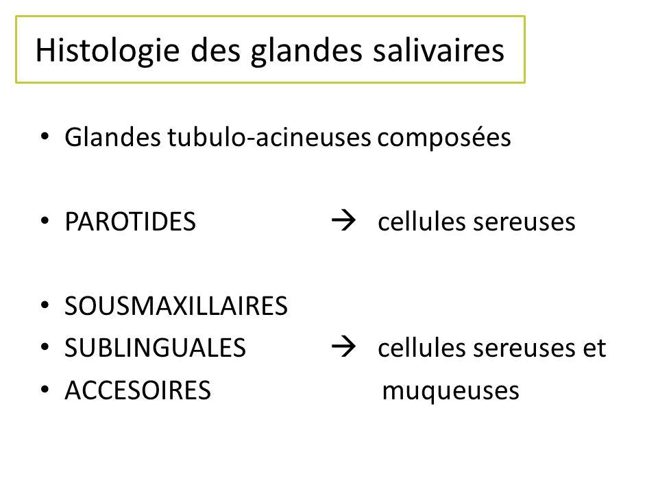 Histologie des glandes salivaires