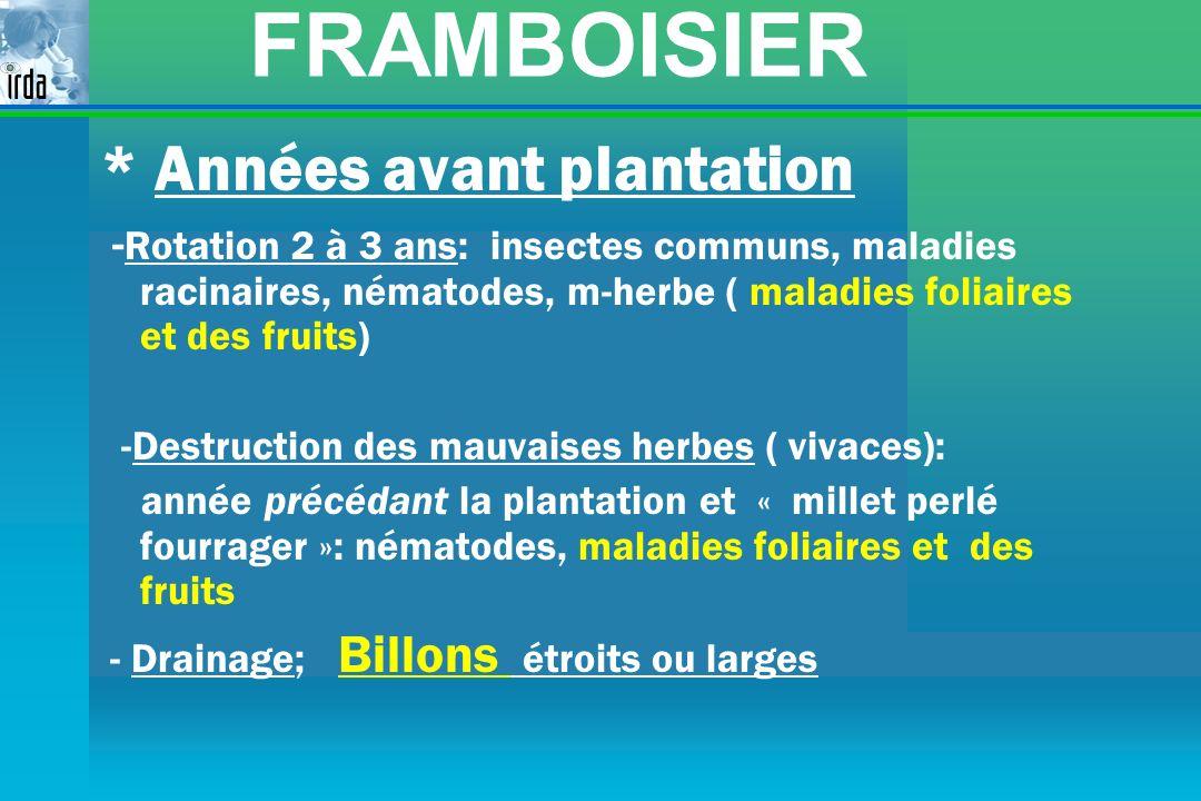 FRAMBOISIER * Années avant plantation